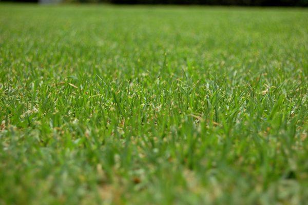 Låt en robotgräsklippare klippa gräset åt dig